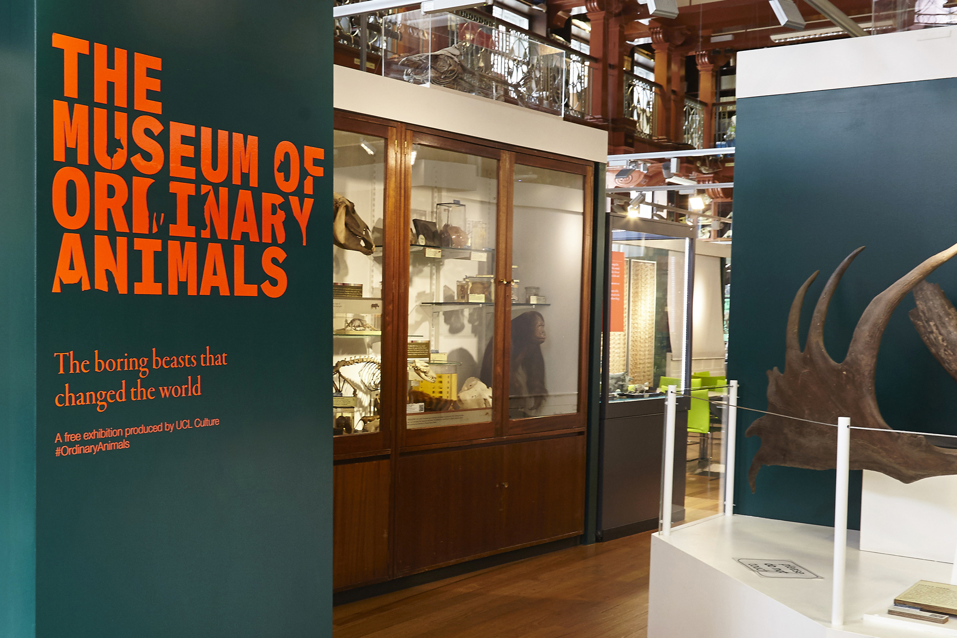 The Museum of Ordinary Animals
