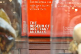 The Museum of Ordinary Animals 1